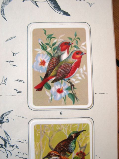 Tuckfield's Tea Bird Book::